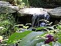 Garvin Woodlands Garden - panoramio.jpg