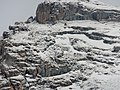 Gemsen beim Madloch - panoramio.jpg