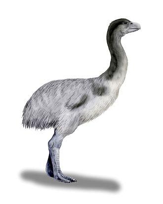 Dromornithidae - Artist's reconstruction of Genyornis newtoni.