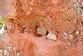 Geology in Tiermes (Soria, Spain) - Buntsandstein - lag deposit.jpg