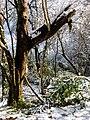 Georgia snow IMG 4747 (25075959408).jpg