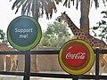 Giraffe Partner (8593965895).jpg