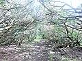 Goat Trail - panoramio.jpg