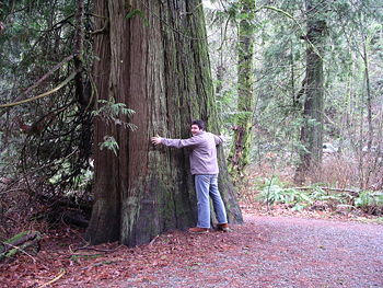 Diego hugging a huge Western Redcedar tree.