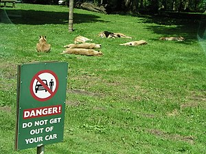 Longleat Safari Park - Image: Good advice^ geograph.org.uk 256815