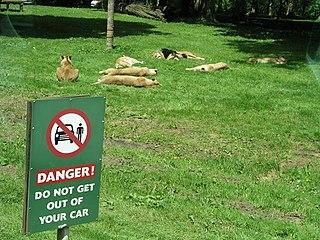 Longleat Safari and Adventure Park Safari Park in Wiltshire, England