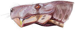 Gorgonops - Head of G. torvus