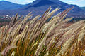 Grasses in the wetlands (5232113623).jpg
