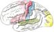 Gehirn von lateral