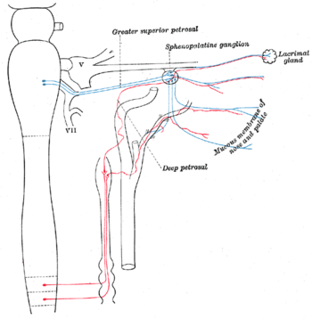 図4:蝶形口蓋及び上頚神経節への自律神経の接続