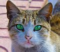 Green eyed cat.jpg