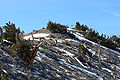 Griffith Peak summit 4.jpg