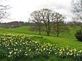Grounds in Basildon Park - geograph.org.uk - 2442.jpg