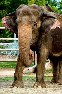 Tulsa Zoo - Wikipedia