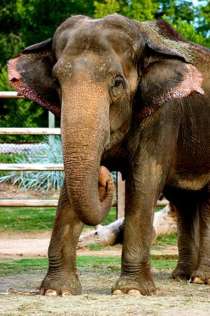 Tulsa Zoo - Gunda, who arrived at the Tulsa Zoo in 1954 has surpassed all staff and animals at the age of 64.