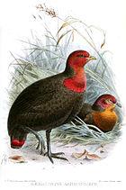 Картина с изображением двух черных птиц: стоящей с красным лицом и грудью и лежащей с оранжевым лицом и грудью.