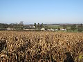 Hall Farm, Weston Colville - geograph.org.uk - 1636259.jpg