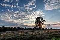 Haltern am See, Westruper Heide -- 2015 -- 7985-9.jpg