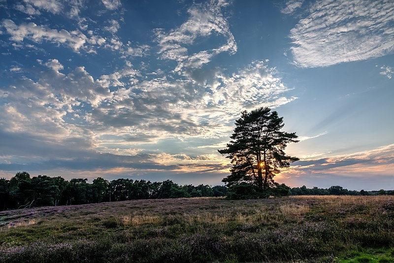 File:Haltern am See, Westruper Heide -- 2015 -- 7985-9.jpg