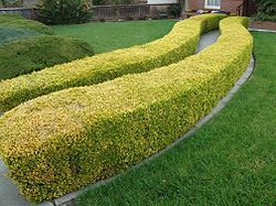 meaning of hedge