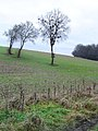 Herberts Hole - old hedge, new hedge - geograph.org.uk - 111020.jpg