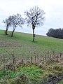 Herberts Hole - old hedge, new hedge - geograph.org.uk - 111020.jpg