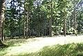 High Wood - geograph.org.uk - 2124053.jpg