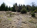 Hiking trail at northeast of the Altkönig 2.jpg