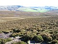 Hillside of The Knott towards Kinder - geograph.org.uk - 995203.jpg