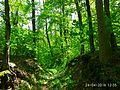 Holodny Yar forest 02.jpg