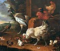 Hondecoeter Domestic fowl with a pheasant.jpg