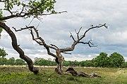 Hondsrug, De Strubben-Kniphorstbosch 19.jpg