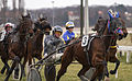 Horse Races 004 (8606927544).jpg