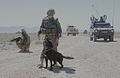 Human and canine bomb disposal experts in Afghanistan.jpg
