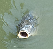 Drink wikiquote for Do fish drink water