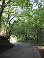 Hunsterson Road at Chapel Wood - geograph.org.uk - 243898.jpg