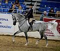 Hunter under saddle Scottsdale 2017 15.jpg