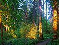 Hyland Woods (formerly Highland Forest Park) 2.jpg