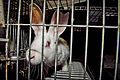 Igualdad Animal - 4520 (7138988745).jpg