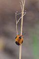 Insect at Pilanesberg National Park.jpg