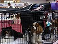 International Dog Show 2018 38.jpg