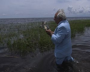 Jack Rudloe -  Jack Rudloe (72) wearing his trademark blue suit for the release of a rehabilitated Kemp's Ridley Sea Turtle