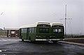 Jamaica Omnibus Service 2.jpg