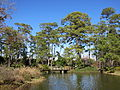 Japanese Garden, Hermann Park, Houston, 2012.JPG