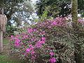 Jardim Antonio Borges (14005103282).jpg