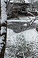 Jardin naturel (Paris) sous la neige 24.jpg