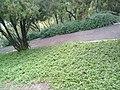 Jardines del Cerro de las Campanas en Querétaro 01.jpg