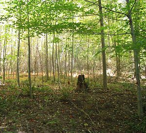 Jefferson Memorial Forest - The forest is home to numerous wild plants and animals.