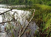Jezioro Orle 1 - panoramio.jpg