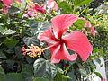 JfLakandulaflowerPampanga0214fvf 01.JPG